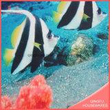 산호 양털 Antislip 인쇄된 매트 또는 양탄자