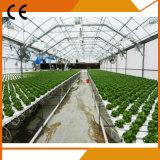 Коммерчески Hydroponic парник систем для Vegetable растущий