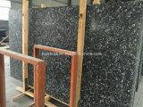 Losa fósil negra del mármol del negro del shell del mar de China