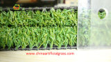 Césped sintético al aire libre Campo de putting green hecho en China