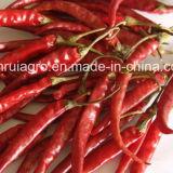 Pimentões vermelhos secos Withstem de Yunnan
