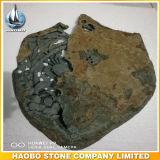 De Grafzerk van de Gravures van de Steen van het basalt