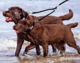 Doppelte einziehbare Hundetrainings-Leine-Paare für zwei Hunde