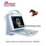 말 느로광이를 위한 가득 차있는 디지털 초음파 스캐너