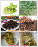 Découpeur de machine de découpage de coupeur d'oignon vert/ail Sprout/Celery/Bean/Chinese Chives/Leek coupant la machine