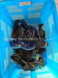 De grote Mens & Dame Sport Used Shoes van de Grootte voor Afrikaan