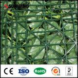 SGS аттестовал зеленую изгородь разрешения клена для домашнего декора сада