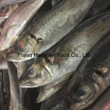 Grand Scad gelé d'oeil des poissons