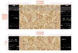 Beste Kwaliteit van de Volledige Tegels van de Trede van het Lichaam in Foshan