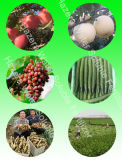L'engrais organique d'extrait d'algue pour des tomates