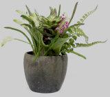 홈 또는 정원 훈장 인공적인 혼합 Succulents 화분에 심는 Bonsai