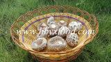 Гриб белого цветка весны еды Yongxing высушенный заводом