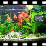 Termômetro submergível exato da temperatura do aquário do LCD Digital com o copo da sução da ponta de prova para o tanque de peixes