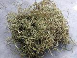 Natürliches Salicin CAS kein Barke-Auszug der weißen Weide-84082-82-6