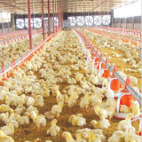 Il pollame automatico gestisce la strumentazione della tettoia per la griglia