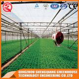 الزراعة متعدد سبان ورقة البولي البيت الأخضر للزراعة