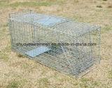 Galvanisierte Stahlmaschendraht-lebendes Tier-Falle für Eichhörnchen