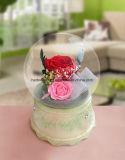 Сохраненная головка гвоздики цветка естественная для коробки нот цветка DIY