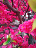 人工的なモモの花の木2メートルの供給しなさい