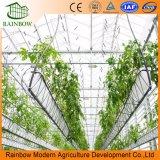 Instalación Fácil de Precio Fácil Fresa Plantando Solar Invernadero