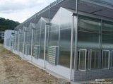 工場割引価格およびVenlo様式の電流を通された鉄骨フレームの温室