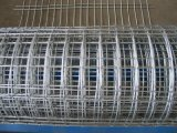Dipped caldo Galvanized Welded Wire Mesh con Low Price