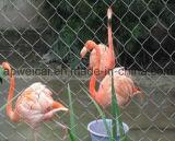 Red inoxidable del pájaro
