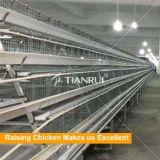 Cage particulièrement développée de couche de poulet à vendre à Philippines