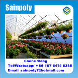 Do túnel comercial da película plástica de Multispan casa verde para o tomate