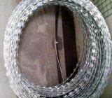 Горяч-Окунутый гальванизированный Concertina провод Q195 10kgs/Roll бритвы