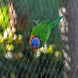 앵무새 그물세공 독수리 그물