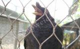 Redes da águia da rede do papagaio
