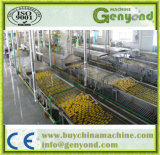 Completare il mandarino nella linea di produzione dello sciroppo
