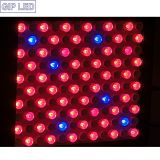 Dubbel - kanaal Spectrum Matching 600W LED Grow Light Good voor Plant Growing