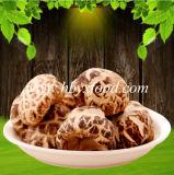 Fungo di Shiitake del fiore del tè con l'alimento salutare del certificato dello SGS Halal