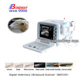Veterianry 제품 4D 도풀러 말 초음파 스캐너