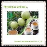 Pó elevado do extrato da fruta de Qualtiy Phyllanthus Emblica
