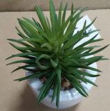 Plantes et fleurs artificielles de la centrale succulente Gu-Jys-00037