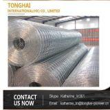Rete metallica saldata galvanizzata dell'acciaio inossidabile di alta qualità