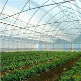 정원을%s 완전히 직류 전기를 통한 강철 프레임을%s 가진 많은 갱도 온실