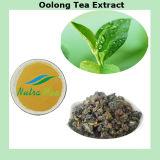 Extrait naturel de thé de 100% Oolong (polyphénol 15%~95%)