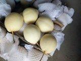 中国の新しい穀物の新しい良質のナシ