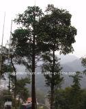 Torretta Bionic dell'albero