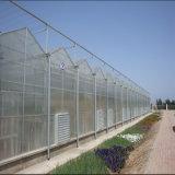 Estufa da folha do PC da Multi-Extensão para agricultural feito em China