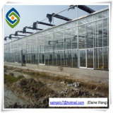 Multispan Glass Green House for Strawberry