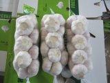 Размер чеснока 5.0cm он-лайн оптового китайского свежего чеснока нормальный белый