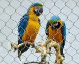 Malla pajarera (alambre de acero inoxidable de malla de inicio de las Aves)