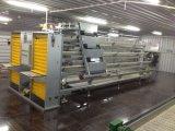 Pollo Layer Cage con Full Set Feeding Equipment