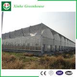 Serra di plastica del blocco per grafici d'acciaio di agricoltura di Qingzhou per le verdure