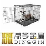 HOME do cão de animal de estimação do buldogue francês